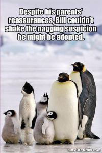 funny-adopted-cat-penguin